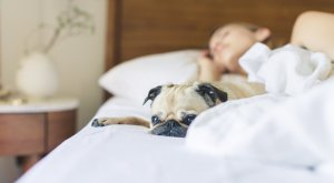 pug and person sleeping on a bed